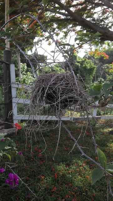 Nest texture