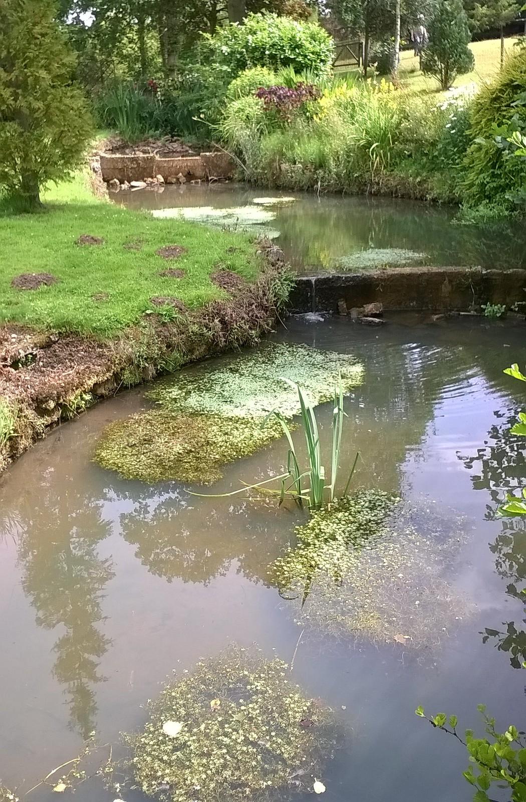 Stream & flora Inkpen