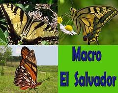 Macro El Salvador Comment Awards 2015