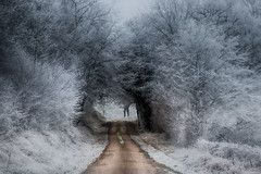 Ambiance d' hiver - Photo of Chevannes-Changy