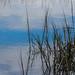 Moving Water Blues by Gabriel FW Koch