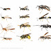 wasps composite 1 by DaveHuth