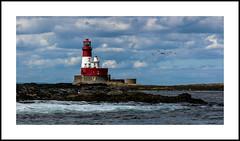 Farne Islands (1)