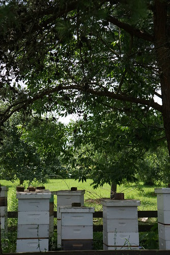 bee keeping at slate run farm