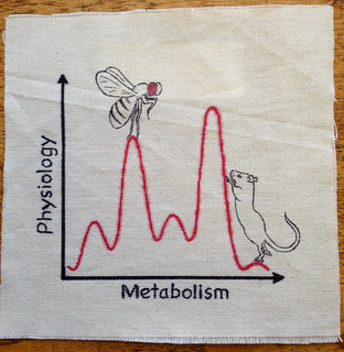063-Physiology and Metabolism