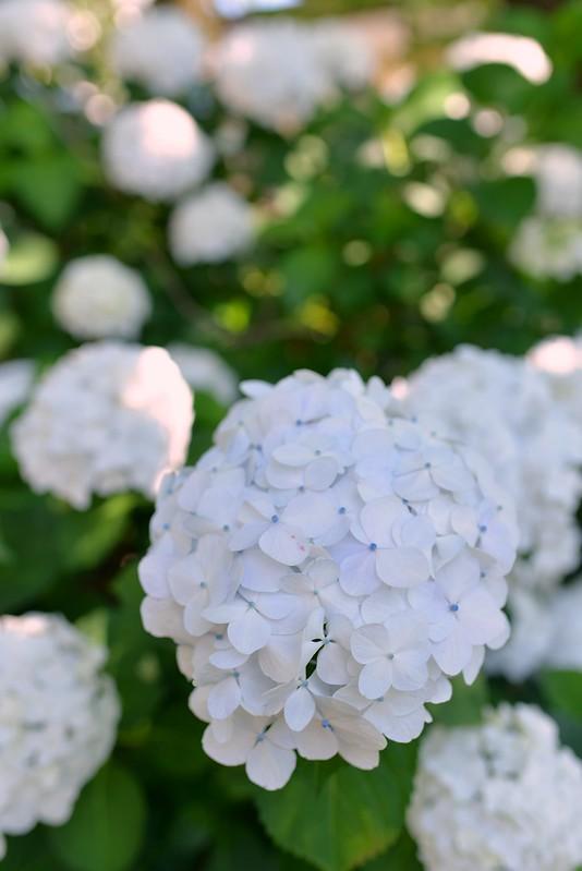 塩原温泉大出館の旅 2015年7月11日
