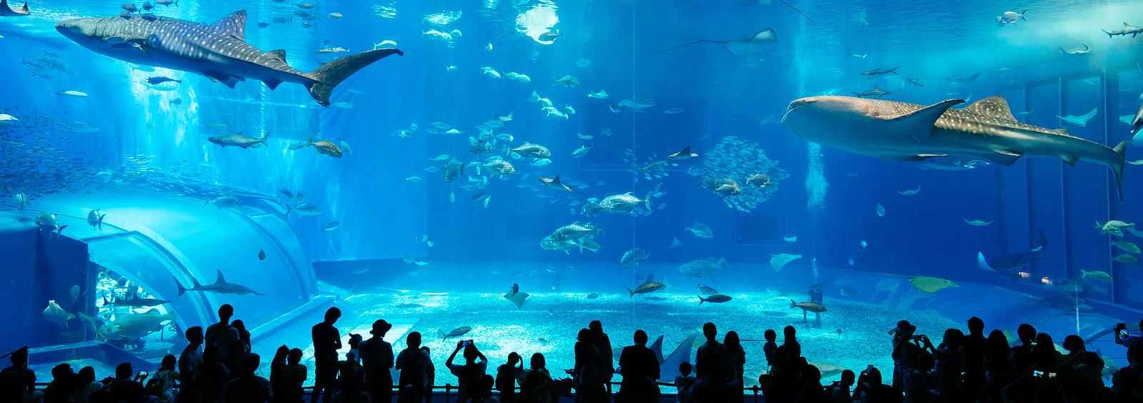 沖繩必來的美麗海水族館