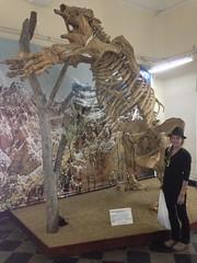 Museo Paleontológico.  Tarija, Bolivia.