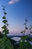Blaue Stunde am Roten Hang