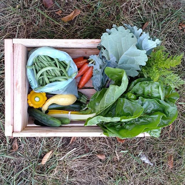 Week 11 #CSA #adalynfarmcsa #localfarm #localfood #stanwood
