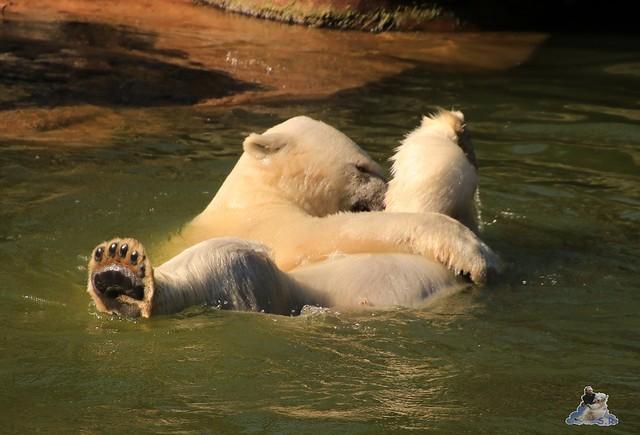 Tierpark Berlin 02.08.2015 058