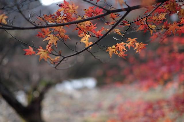 Autumn at the trace5@Koran-kei, near Nagoya