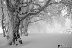 Monte Le Gronde, nell'incantesimo dell'inverno