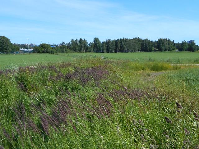 Niittykasveja 2.7.2015 Espoon Karakallion ja Leppävaaran välinen peltoalue