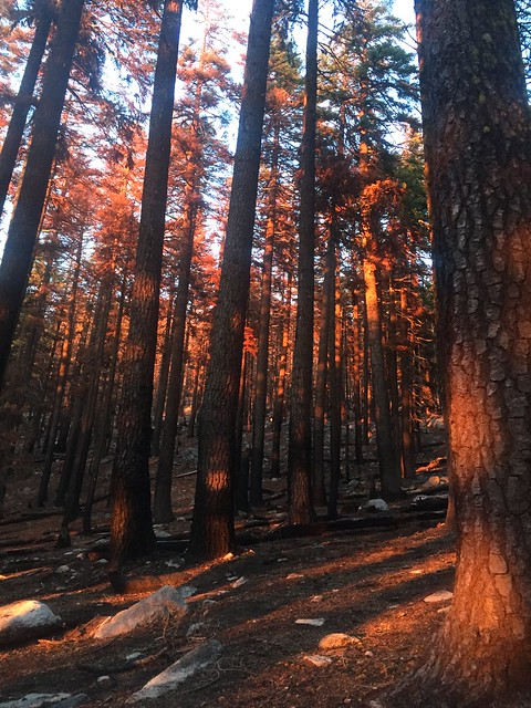 Burnt forest at sunset, m1588
