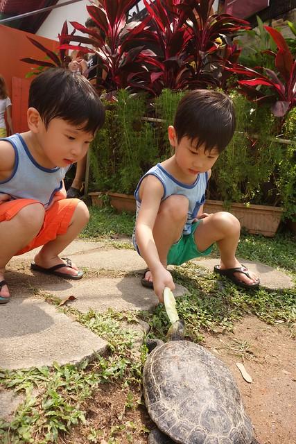 Feeding another tortoise species.