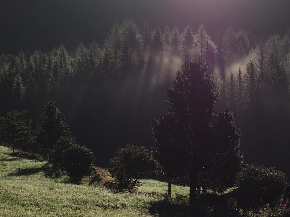 Little mornings fogg