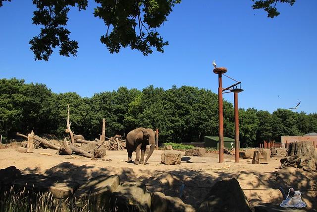 Ouwehands Dierenpark Rhenen 01.07.2015  058