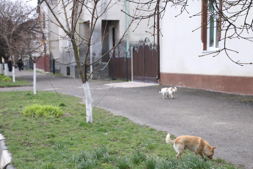 Ukraine209
