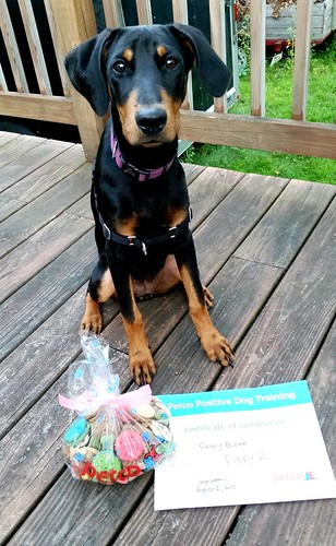 Doberman Puppy with Puppy Class Certificate and Treats from Petco - Lapdog Creations