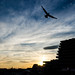 Sunset Flight by NathalieSt