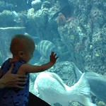 Fun @the SC Aquarium