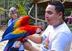 'Overseas Adventure Travel', 'Route of the Mayas', Honduras, Jan, Macaw Mountain, OAT