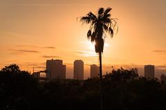 Tampa Sunset 1