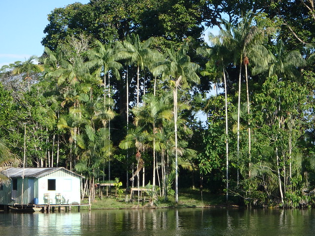 A home built on stilts in the Brazilian Amazon.