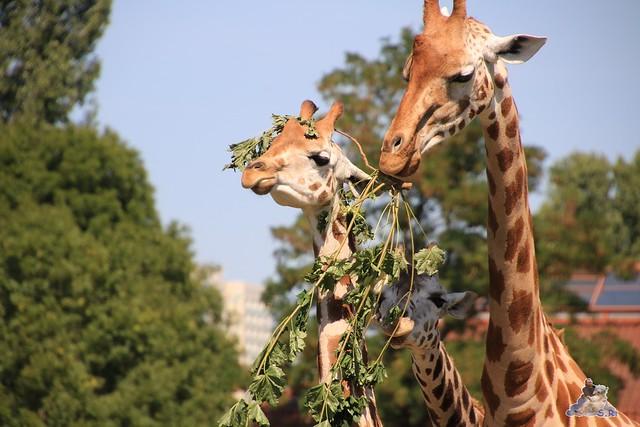 Tierpark Berlin 02.08.2015 0192