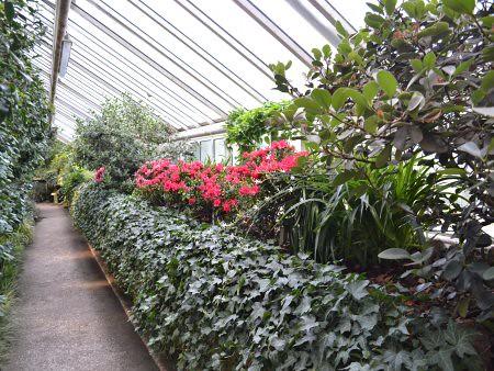 Gradina Botanica 1 5 Recomandari turistice in Berlin