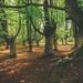 Parc Naturel de Gorbeia