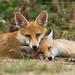 Sisterly love by Greg Morgan wildlife