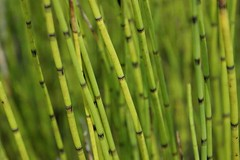 bamboo, grass, plant, macro photography, green, plant stem,
