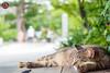Nakijin Meow by jonathan.leung