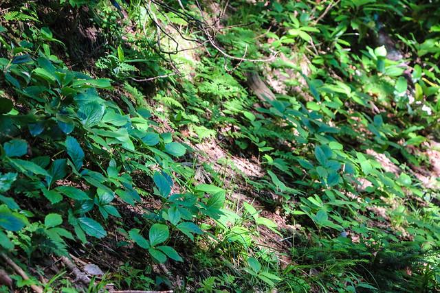 2014-07-21_01567_北海道登山旅行.jpg