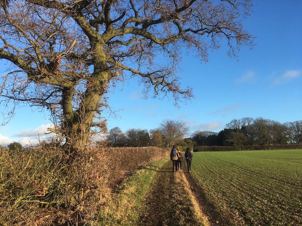Welwyn Circular walk