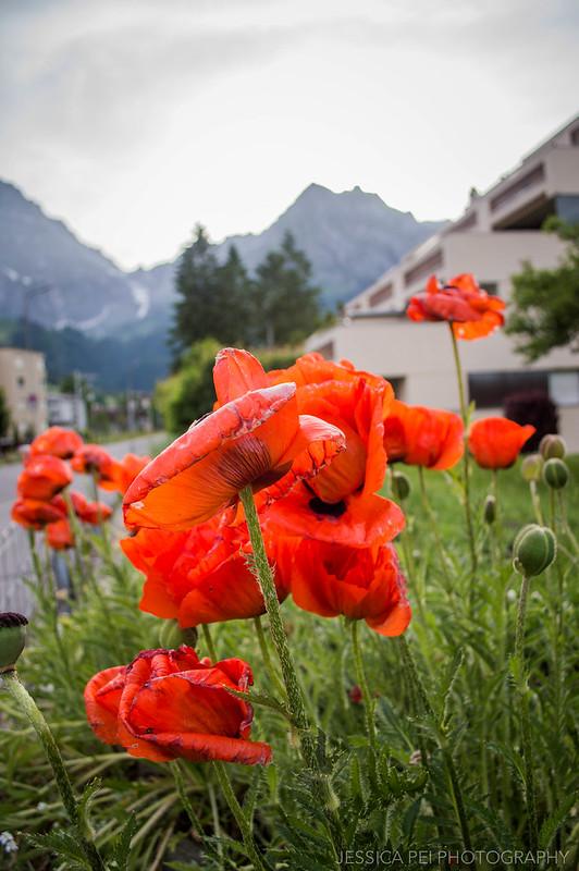 Flowers Engelberg Switzerland