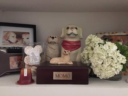 Momo's urn