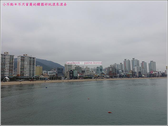 釜山南川洞櫻花隧道 (62).JPG