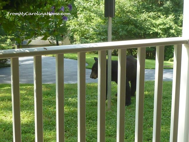 Bear July 2015 - 1