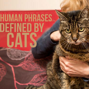 Human Phrases in Cat