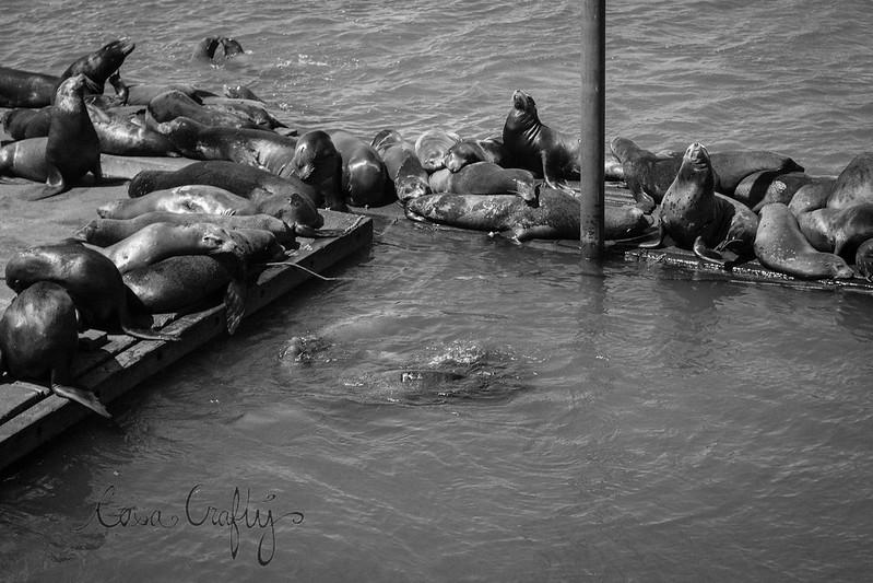 sea lions1 (1 of 1)