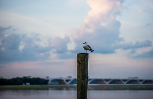 A Perch with a View by Geoff Livingston