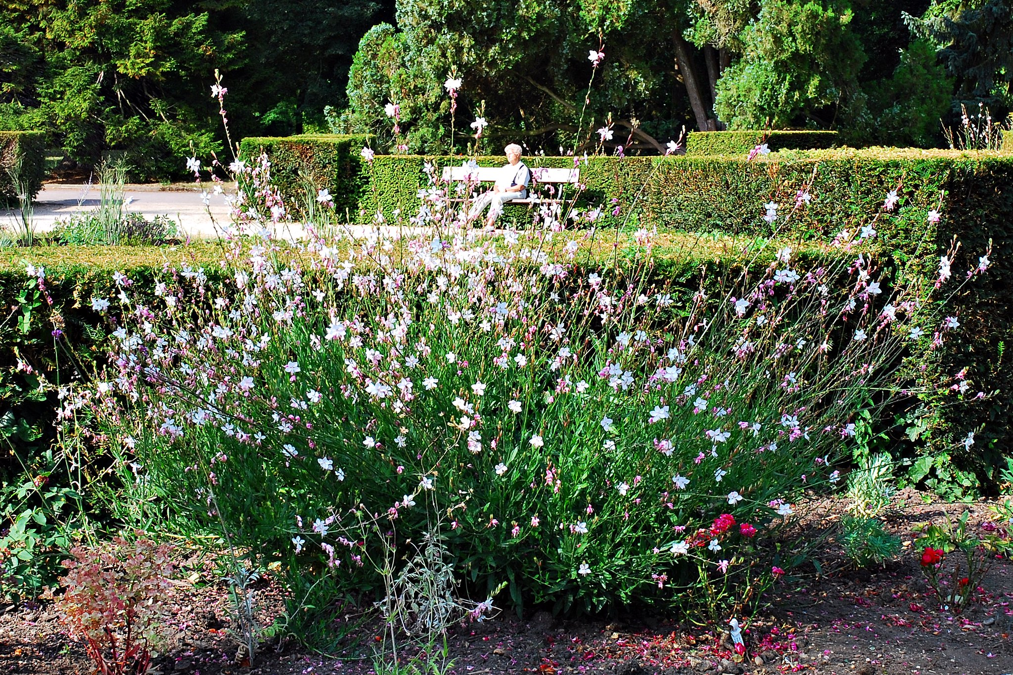 Back to photostream for Jardin botanique metz