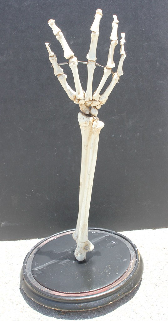 Replica Human Hand