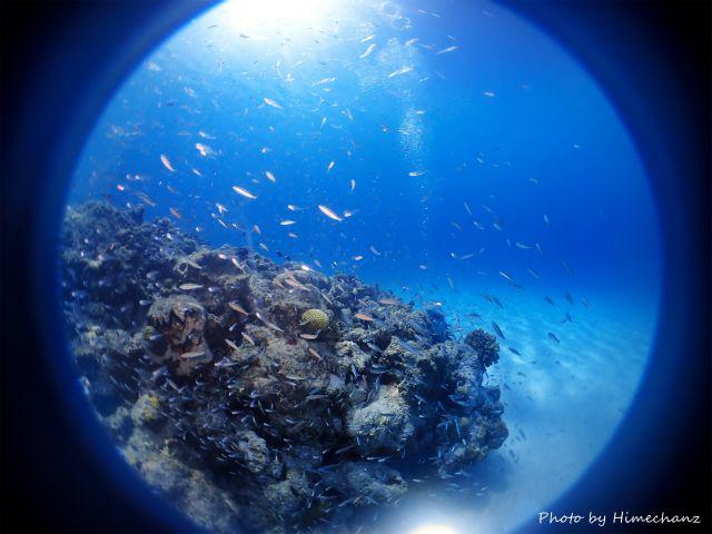 スカシテンジクダイとグルクン幼魚の群れ