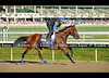 Triple Crown winner and Haskell hopeful American Pharoah at Monmouth Park