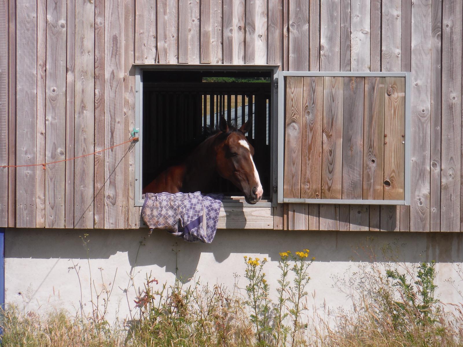 Horse at Burton Park Farm SWC Walk 217 Midhurst Way: Arundel to Midhurst