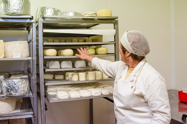 20150522-Cheesemaking-at-Corzano-e-Paterno-Winery-0279